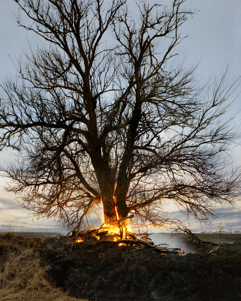 Tree on Fire  , 2009