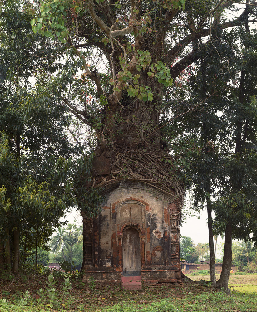 Banyan Tree and 16th Century Terracotta Temple, Attpur, West Bengal, India