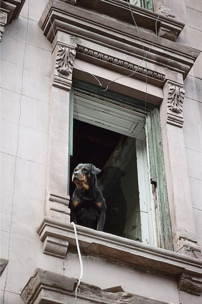 257 Malcolm X Blvd., Harlem , 1998