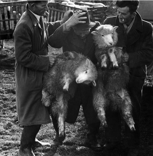Paddy O'Flannagan of County Galway, Ireland,  1954