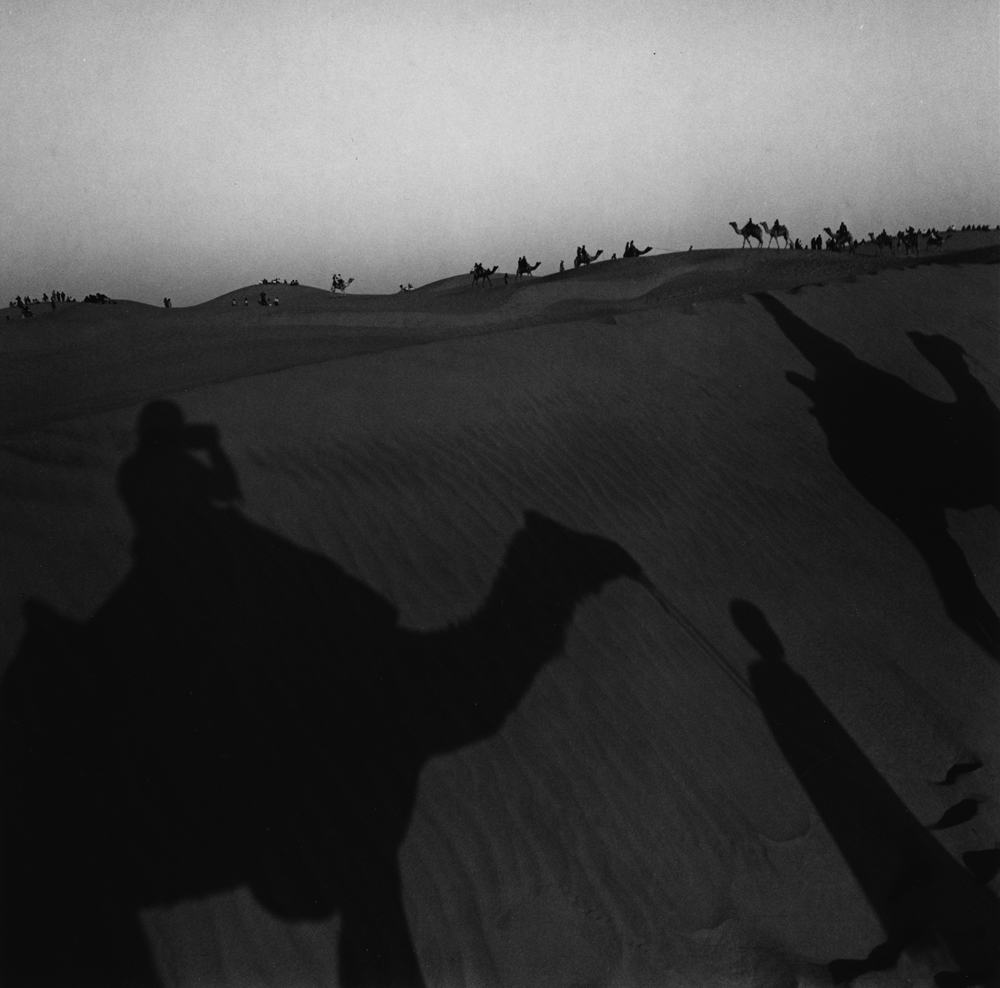 Untitled  (camel shadow), from the series  asor