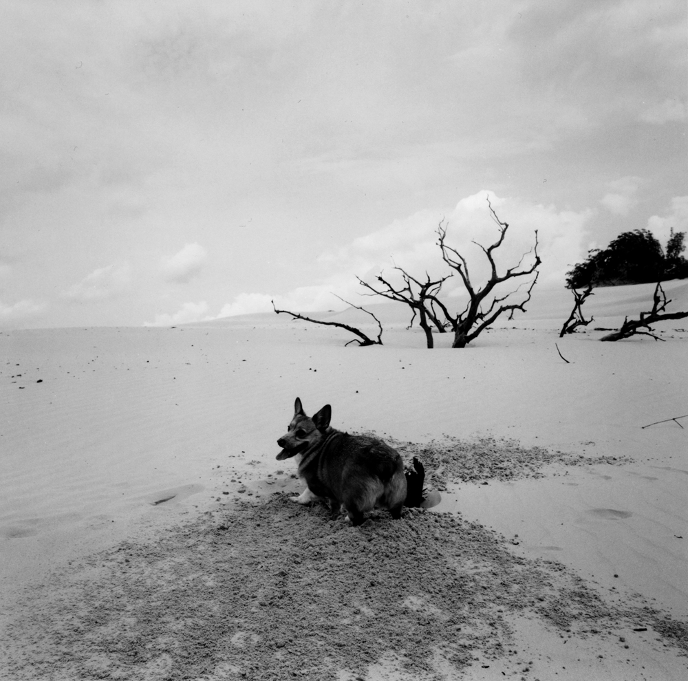 Untitled  (dog in desert), from the series  asor