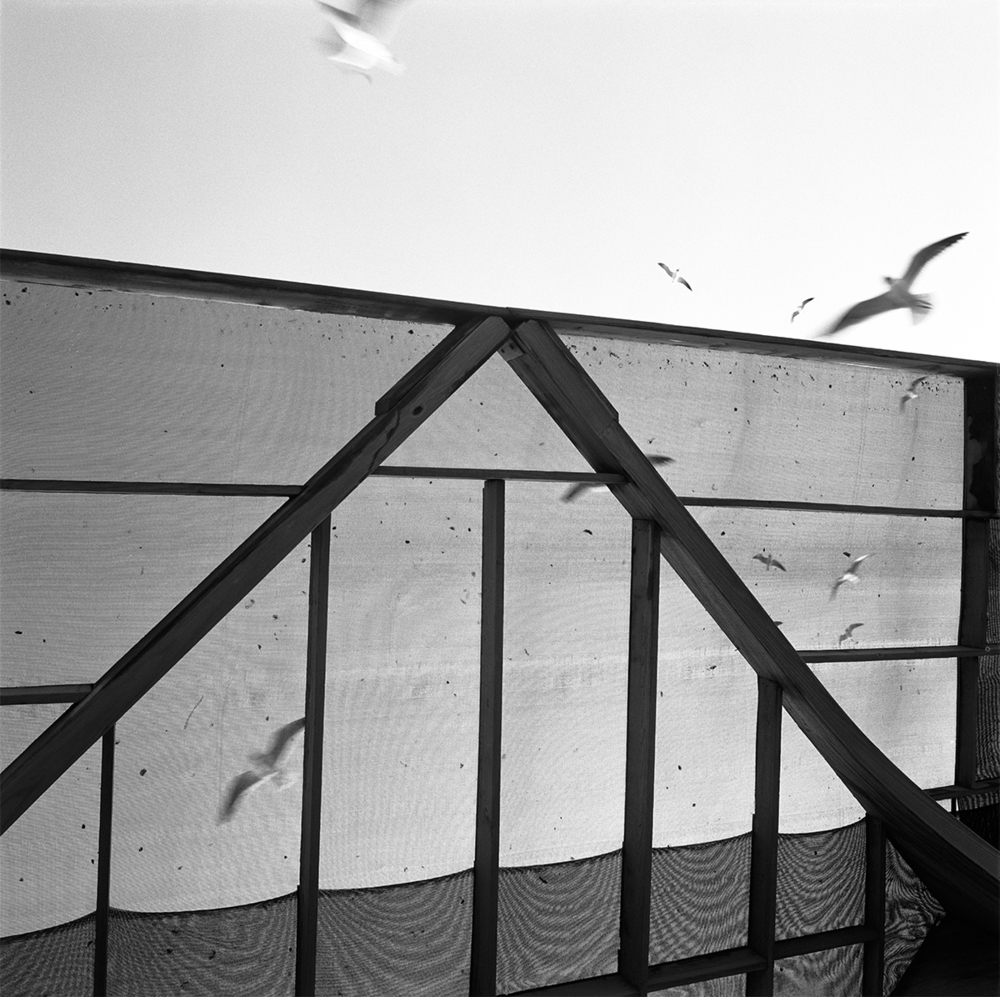 Graciela Iturbide  Sin titulo, Isla del Padres, South Texas , 2002 30 x 30 inch Black and White Print on Fuji Crystal Archive Paper Mounted to archival museum board