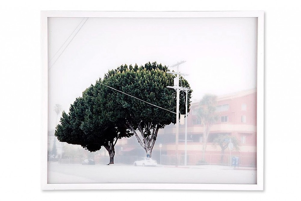 Ficus #6 , 2009