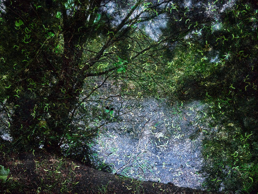 Copy of Tent-Camera Image: Pond in Hampstead Heath. London, England, 2017