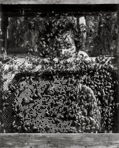 Graciela Iturbide   Laureana y Las abejas, Xochimilco, Mexico,  1994 20 x 16 inch Silver Gelatin Print Signed by the artist in ink on recto Printed under the supervision of the artist From the collection of the artist Illustrated in: Graciela Iturbide, Images of the Spirit, Aperture,1996, frontispiece $6,000