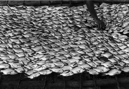 Graciela Iturbide   Pescaditos de Oaxaca,  Oaxaca, 1992 16 x 20 inch Silver Gelatin Print Signed by the artist on ink on recto From the collection of the artist Illustrated in: Graciela Iturbide,  Images of the Spirit,  Aperture, 1996, pages 80-81;  Graciela Iturbide. The Hasselblad Award 2008 , Hasselblad Foundation/Steidl, page 54-55.; Graciela Iturbide, MAPFRE, 2009, page 83 $6,000