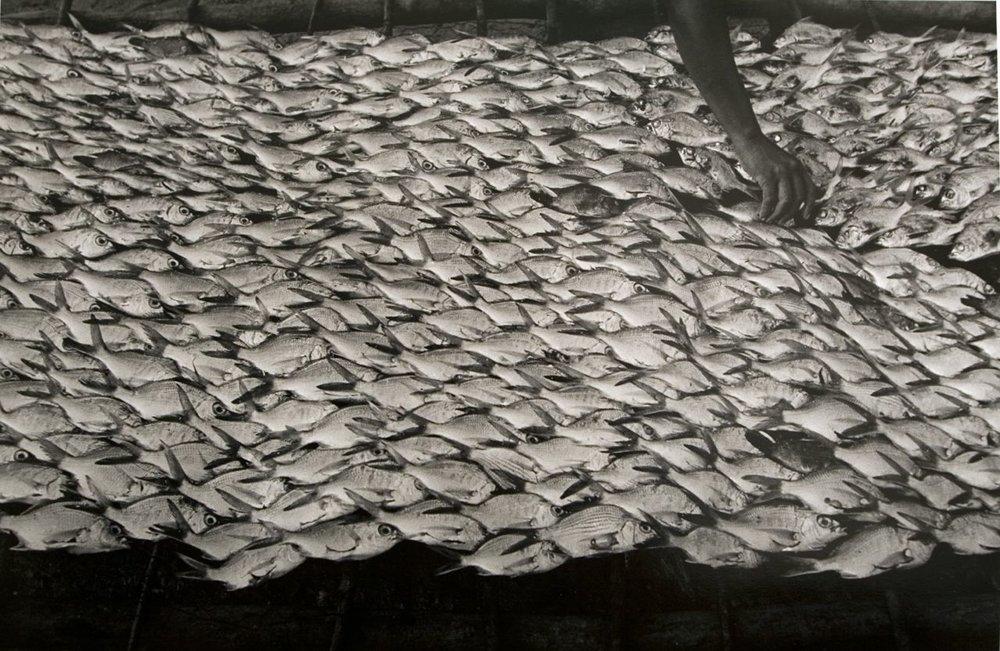 Graciela Iturbide    Pescaditos de Oaxaca,  Oaxaca, 1992  16 x 20 inch Silver Gelatin Print