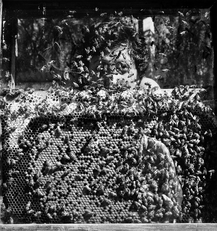 Graciela Iturbide    Laureana y Las abejas, Xochimilco, Mexico,  1994  20 x 16 inch Silver Gelatin Print