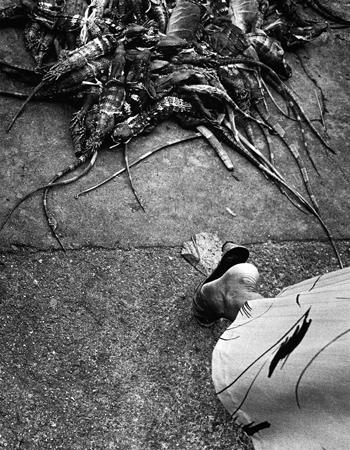 Graciela Iturbide   Mercado, Juchitán , 1984 11 x 14 inch Silver Gelatin Print Signed by the artist on recto Printed by the artist From the collection of the artist Illustrated in: Graciela Iturbide, Juchitan de las Mujeres, page 91; Graciela Iturbide, La Forma Y La Memoria, page 62; Graciela Iturbide 55, Phaidon Press, 2001, page 35 GCP9885 $4,000