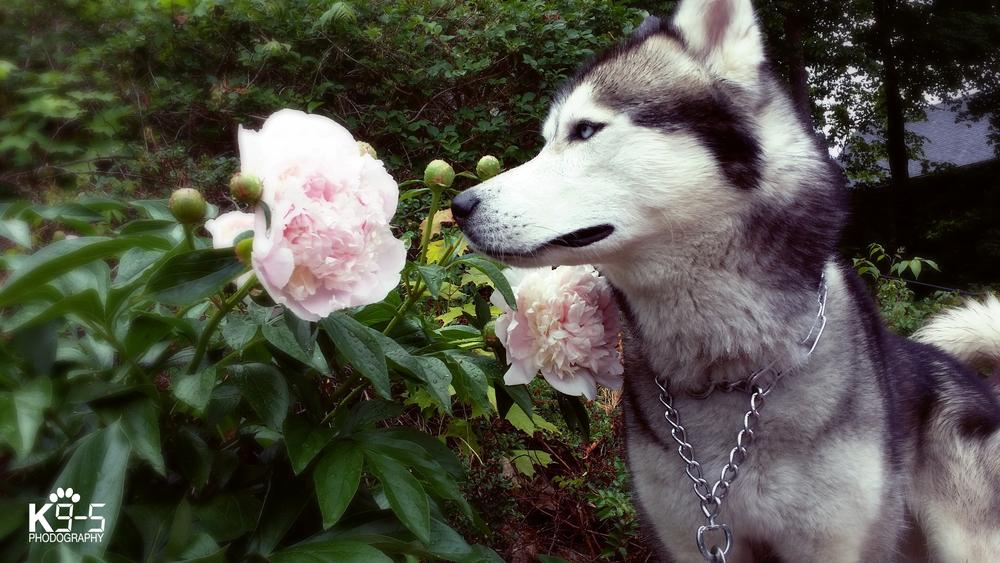 dog290 copy.jpg