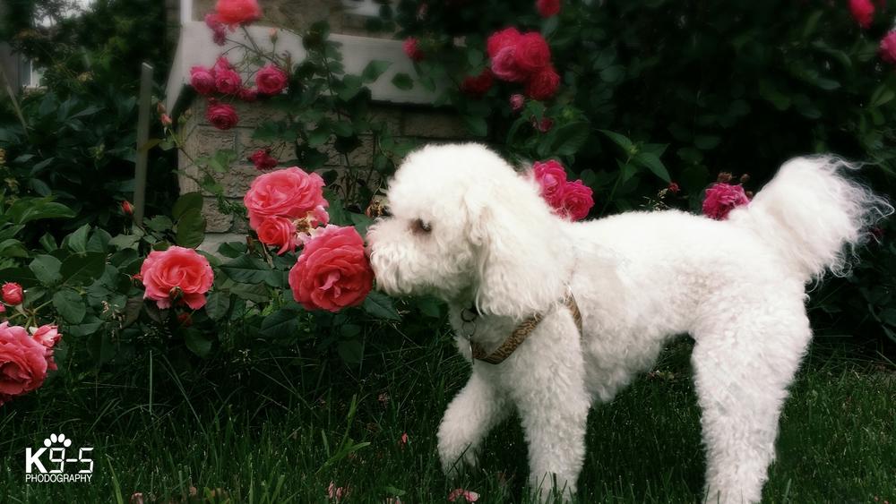 dog294 copy.jpg