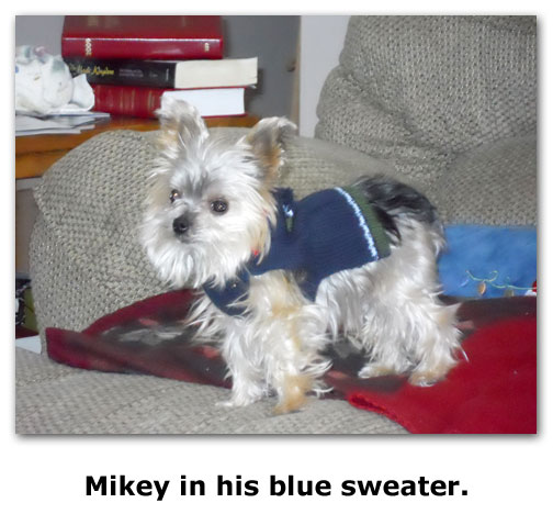 Mikey poses on the Goes house, in his blue sweater