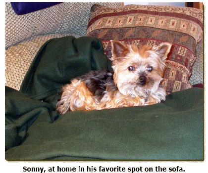 Sonny Goe, resting peacefully on the sofa
