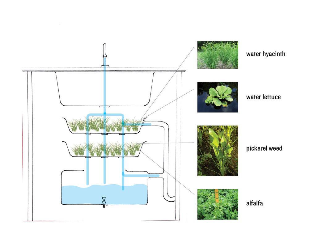 wetland_diagram2.jpg