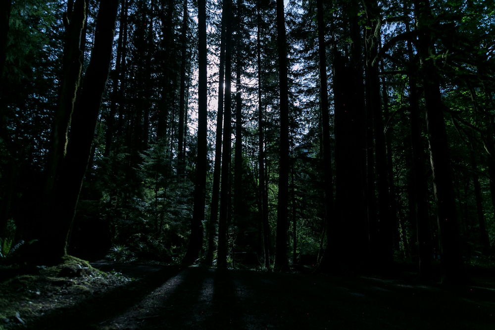 Olympic Peninsula Washington Forest Night Photography