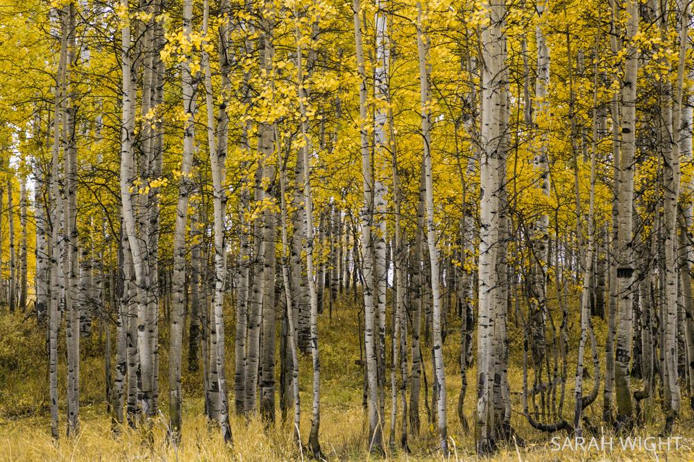 Utah Alpine Loop Fall Colors