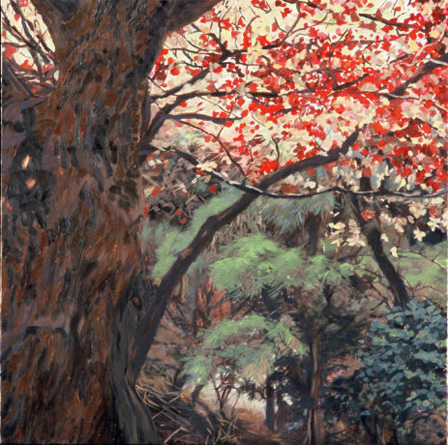 "Korean maple , 2007, oil on canvas, 24 x 24"", SOLD"