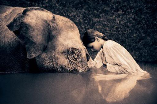 """Until he extends his circle of compassion for all living things, man will not himself find peace.""  — Albert Schweitzer"