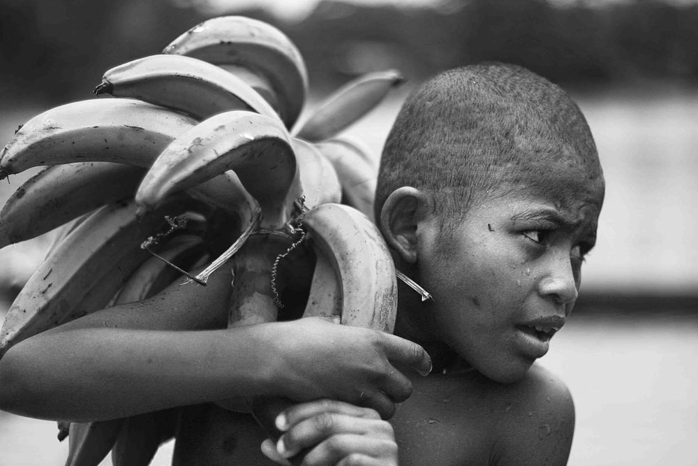 A child carries a branch of bananas back to his house. Limones, Ecuador. 2009.