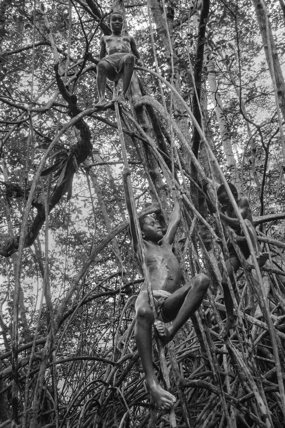 Children play on the roots of the mangroves in the Cayapas Mataje Reserve. Their movements are effortless as if the branches and roots were extensions of their bodies. 2010.