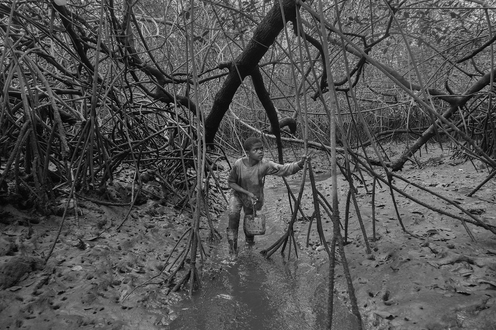 Alex Ocampo walks through a water inlet in the mangrove reserve. Shell pickers are used to work and walk waist deep in the mangrove. Most outsiders will invariably get stuck in the mud and have to get dragged out. 2014.