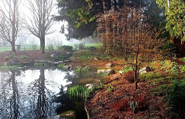 Spring_pond_AnnCarton.jpg