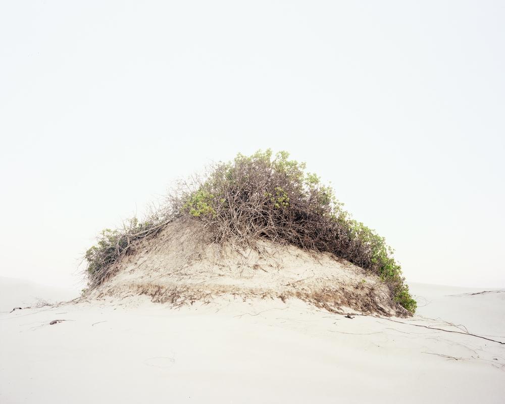 Fuzz [Dune #17], 2013