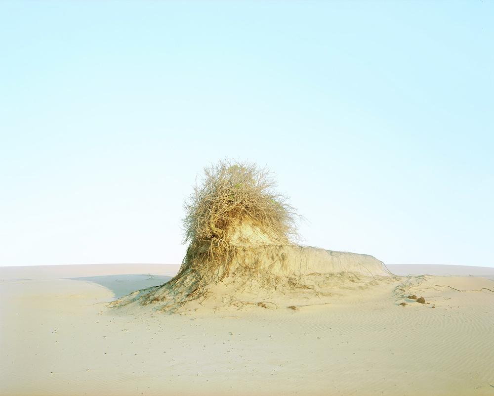 Dune #10, 2011