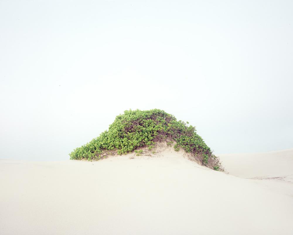 Dune #14, 2013    Words
