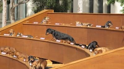 sausage-dogs-1lr-550x308.jpg