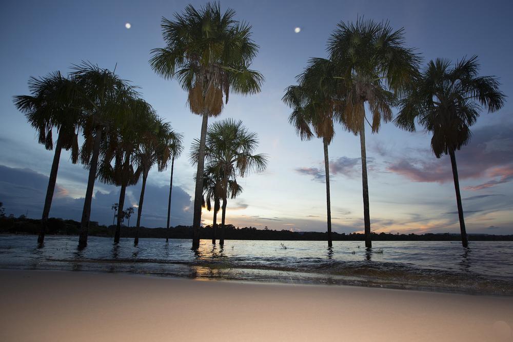 palmeras  copy.jpg