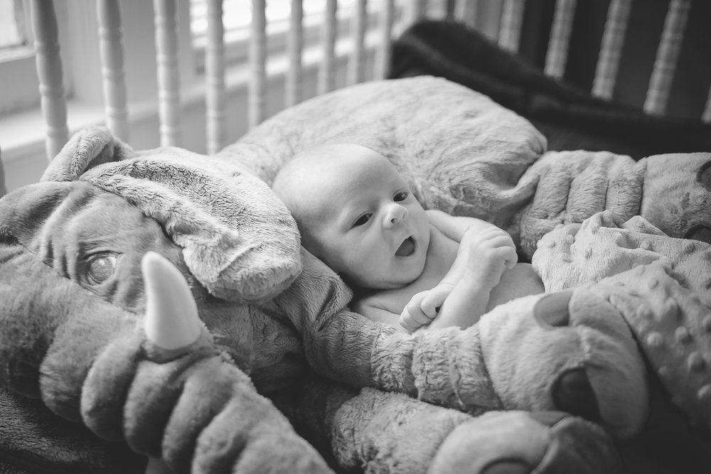 Gainesville Newborn Photographer