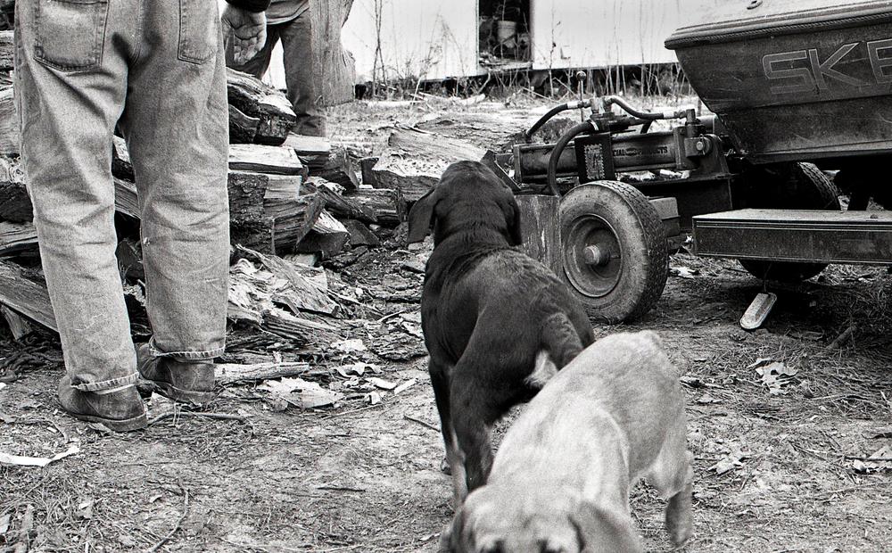 Wayne_&_Hal_Dogs.jpg