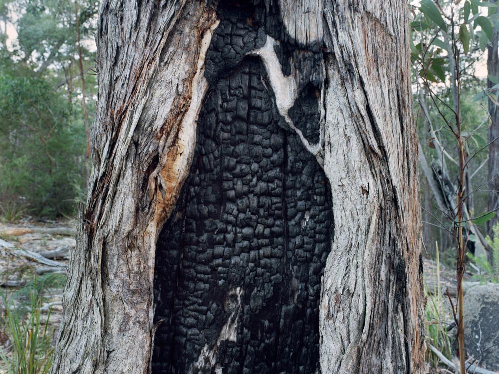 Scar Tree #1