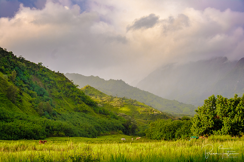 A horse pasture in the Lumahai Valley on the north shore of Kaua'i