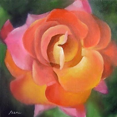 Festival Rose