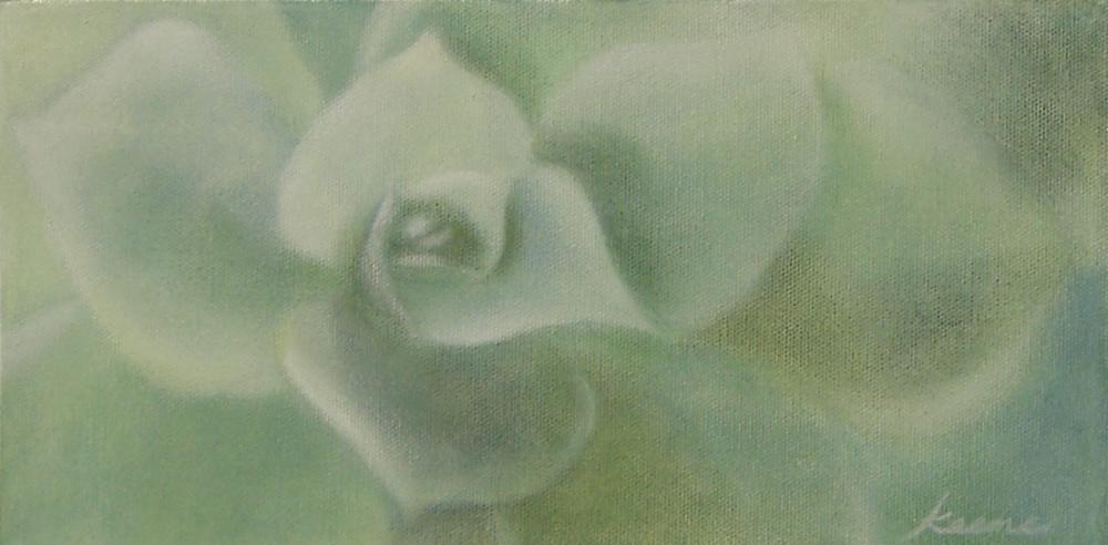 Succulent in the Mist