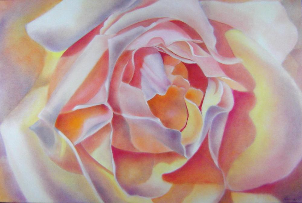 Joe's Coat Rose