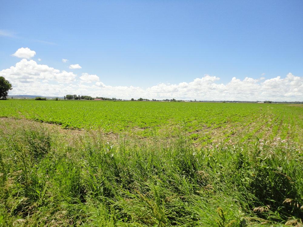 38 Irrigated Acres - Huntley, MT$280,000