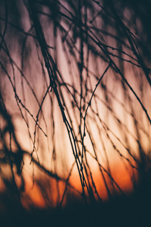 Sunset2-17-8.jpg