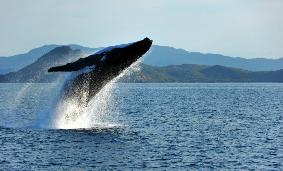animal-encounters-whale-credit-shutterstock.jpg
