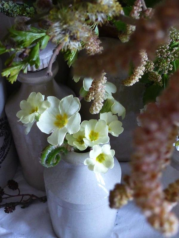 Pretty, delicate wild primroses