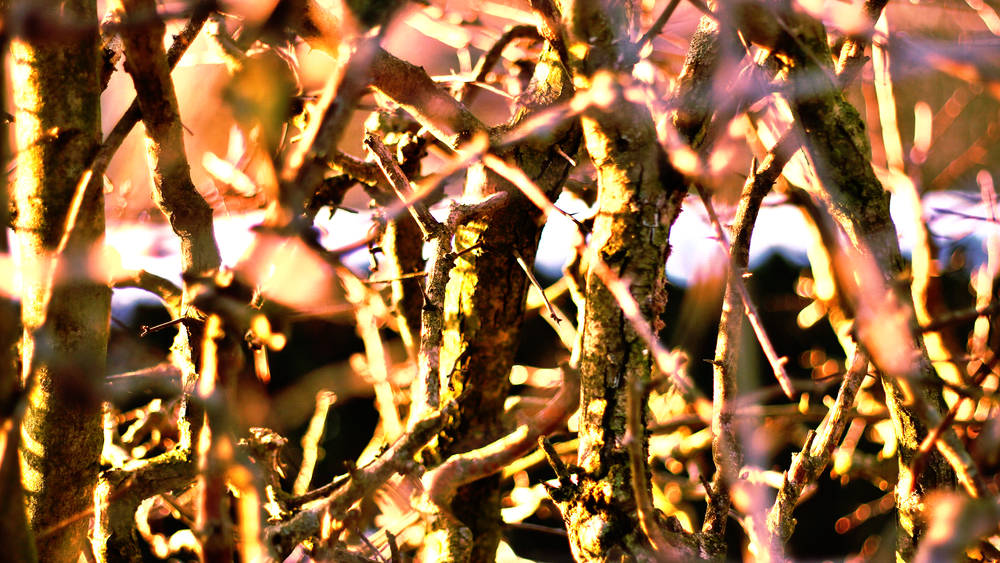 Branches close up.jpeg