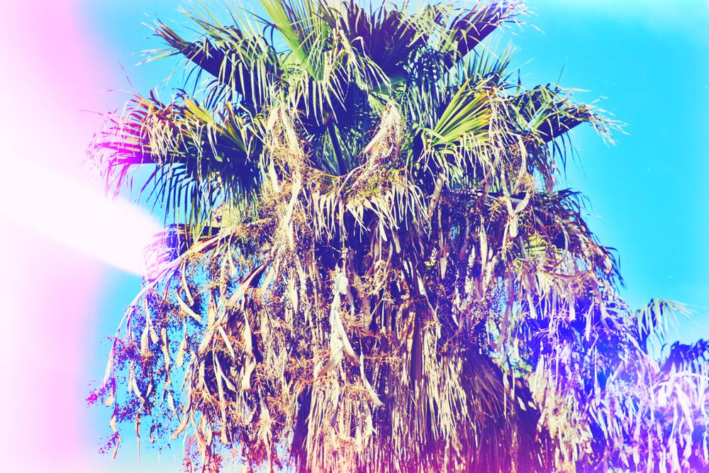 Palm tree close up.jpeg