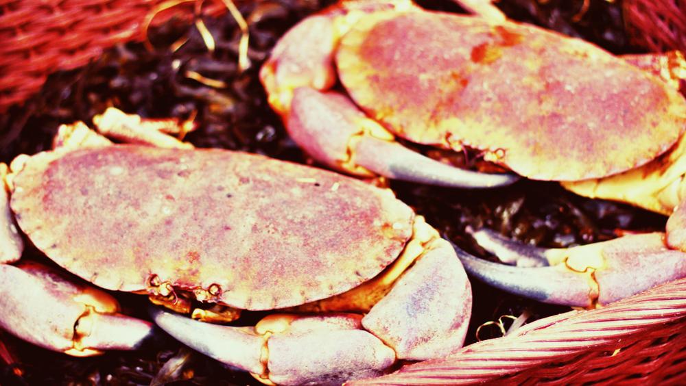 Crabs.jpeg