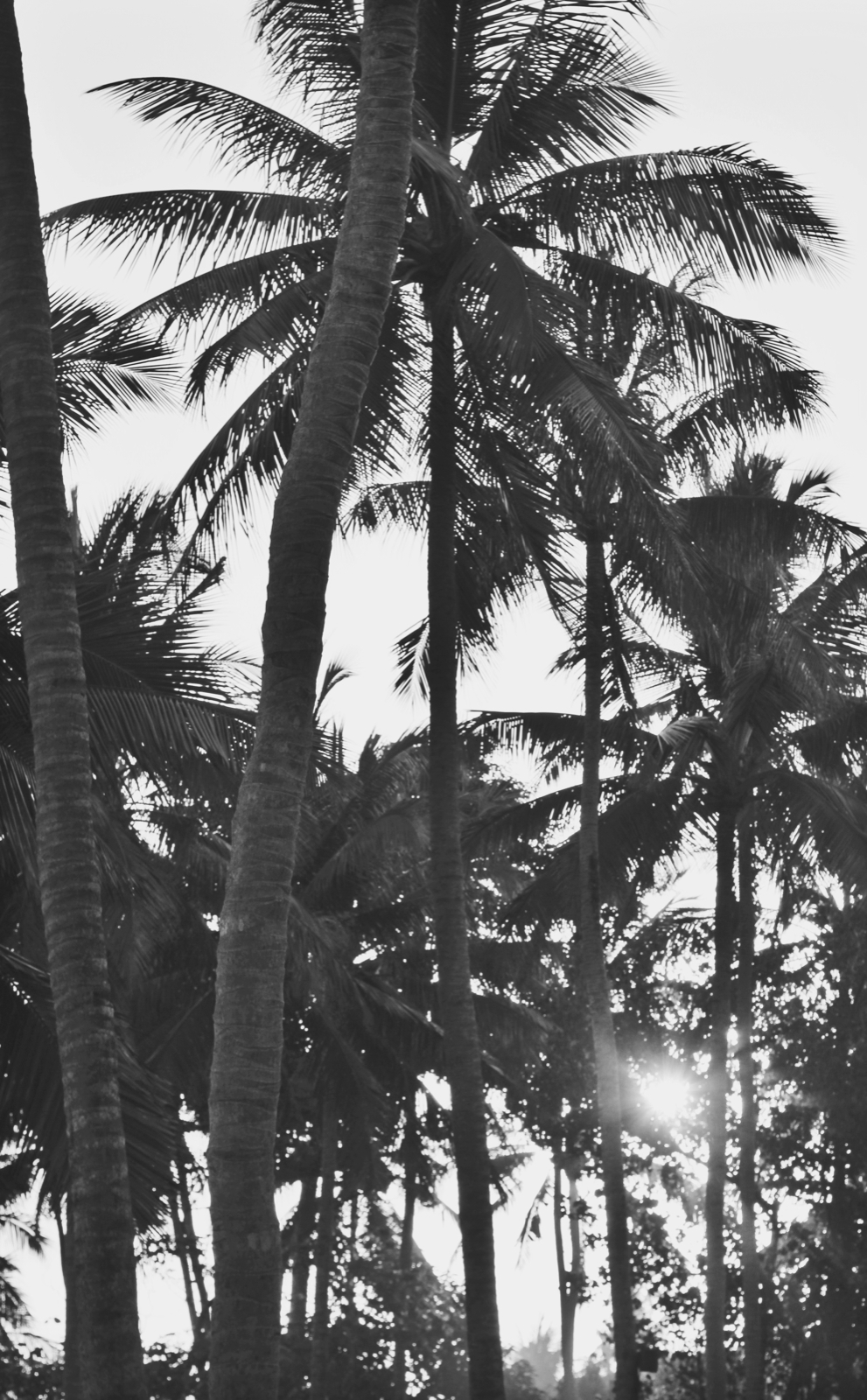 Black and white palm tree.jpeg