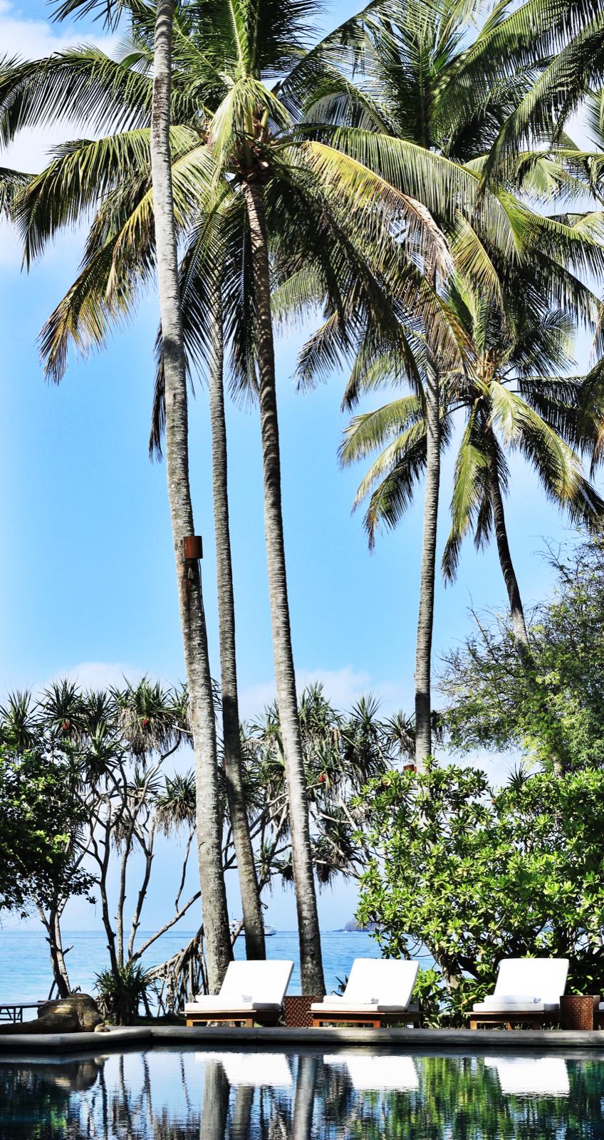 Sunbeds, palmtrees&pool.jpeg