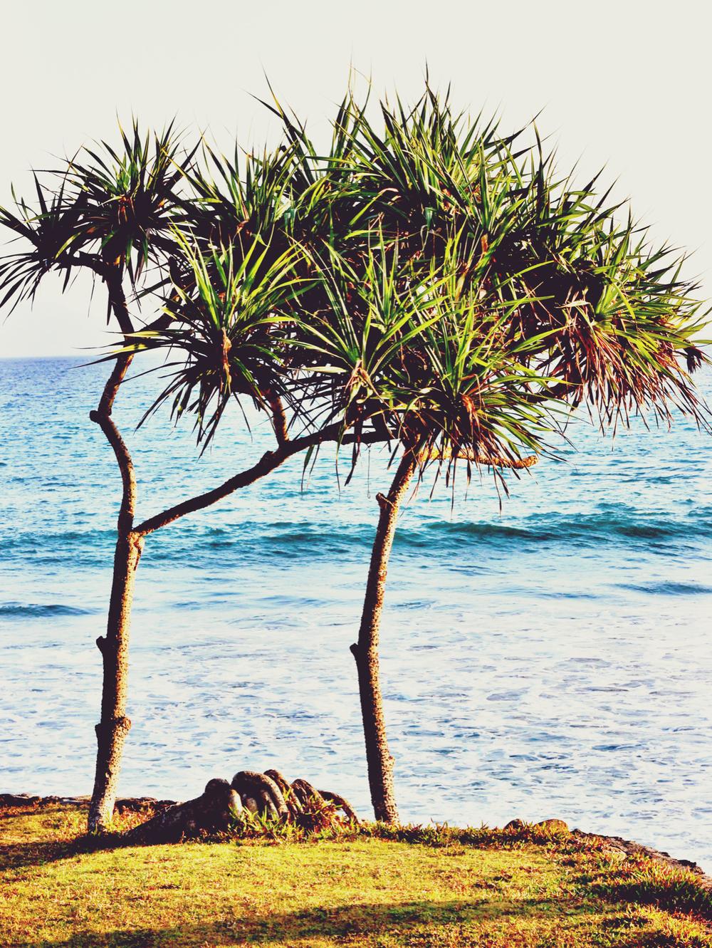 Tree silhouette .jpeg