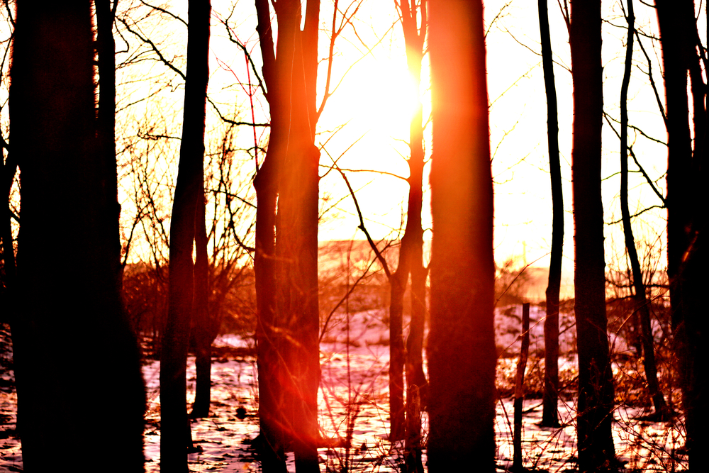 Close up sunset.jpeg